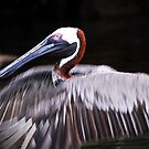Pelican in Galapagos by Marieseyes