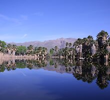 Agua Caliente Park by MMonz