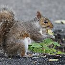 Bethlehem, PA: Just a Squirrel and a Nut by ACImaging