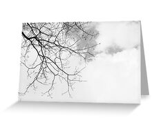 Black / White Winter Barren Tree + Sky Greeting Card