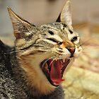 Hear Me Roar! by Barbara Manis