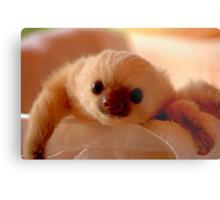Baby sloth in a nursery of Costa Rica Metal Print