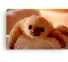 Baby sloth in a nursery of Costa Rica Canvas Print