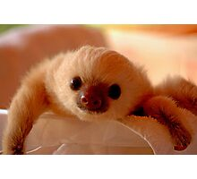 Baby sloth in a nursery of Costa Rica Photographic Print