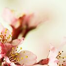 April dreams by AnnaWand