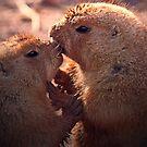 Love on the prairie by AnnaWand