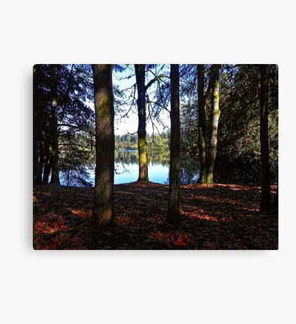 Looking through the trees Canvas Print