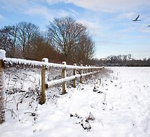 Winter on Desborough Island by Rachael Talibart