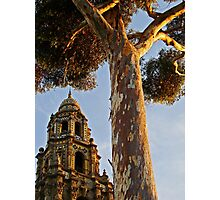 Balboa Park Textures Photographic Print