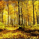 Autumn gold by signore