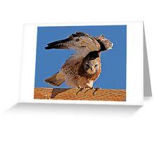 100210 Swainson's Hawk Greeting Card