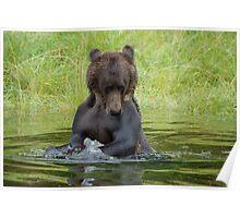 Splashing Bear Poster