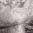 Sunshine Canopy by Ann Garrett