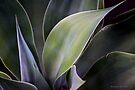 Succulent Abstract - Study In Green 1 by Larry Costales
