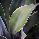 Succulent Abstract - Study In Green 1 by Larry3