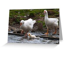 Splash: Young gosling with adult geese Greeting Card