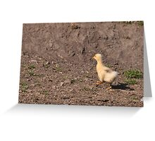 Marching on: Young Gosling+ Greeting Card