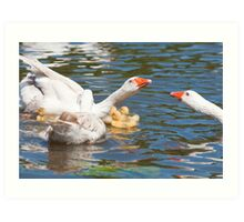 Protection: Adult geese protest young goslings Art Print