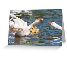 Protection: Adult geese protest young goslings Greeting Card