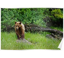 Bear Stepping Stone Poster