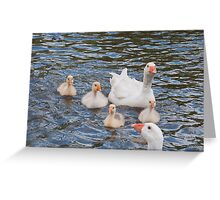 White Goose Family: Adults with Goslings Greeting Card
