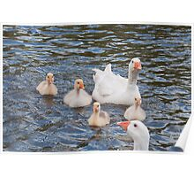 White Goose Family: Adults with Goslings Poster