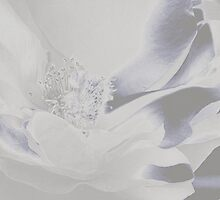 It Was All Just a Dream by Brenda Boisvert