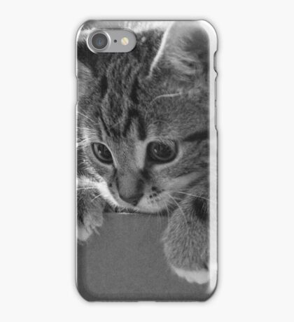 Kitten in a box (non-clothing products) iPhone Case/Skin