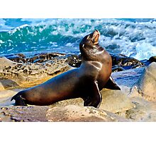 Sea Lion Photographic Print