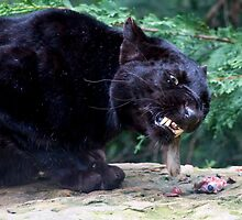 A Ravenous Black Panther by Robert Taylor
