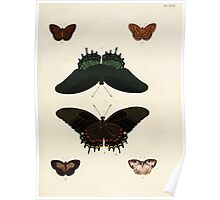 Exotic butterflies of the three parts of the world Pieter Cramer and Caspar Stoll 1782 V3 0049 Poster