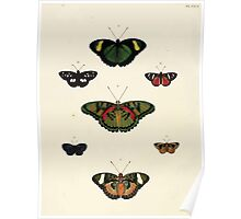 Exotic butterflies of the three parts of the world Pieter Cramer and Caspar Stoll 1782 V2 0220 Poster