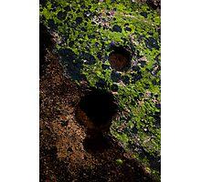 Lichen Granite Erosion - Acadia National Park Photographic Print