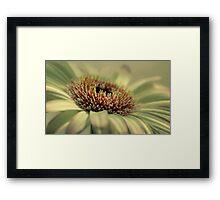 Pastel Gerbera Framed Print