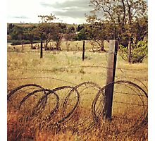 Barbwire Fence Line Outlining Fields of Gold Photographic Print