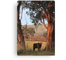 A Fine Morning Canvas Print