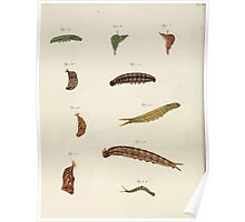 Exotic butterflies of the three parts of the world Pieter Cramer and Caspar Stoll 1782 Supplement 0032 Poster