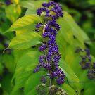 Tiny purple berries by PJS15204