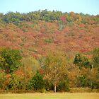 Hillside Fall Colors at Home, N.W. Arkansas by David  Hughes