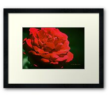 Red on Red Framed Print