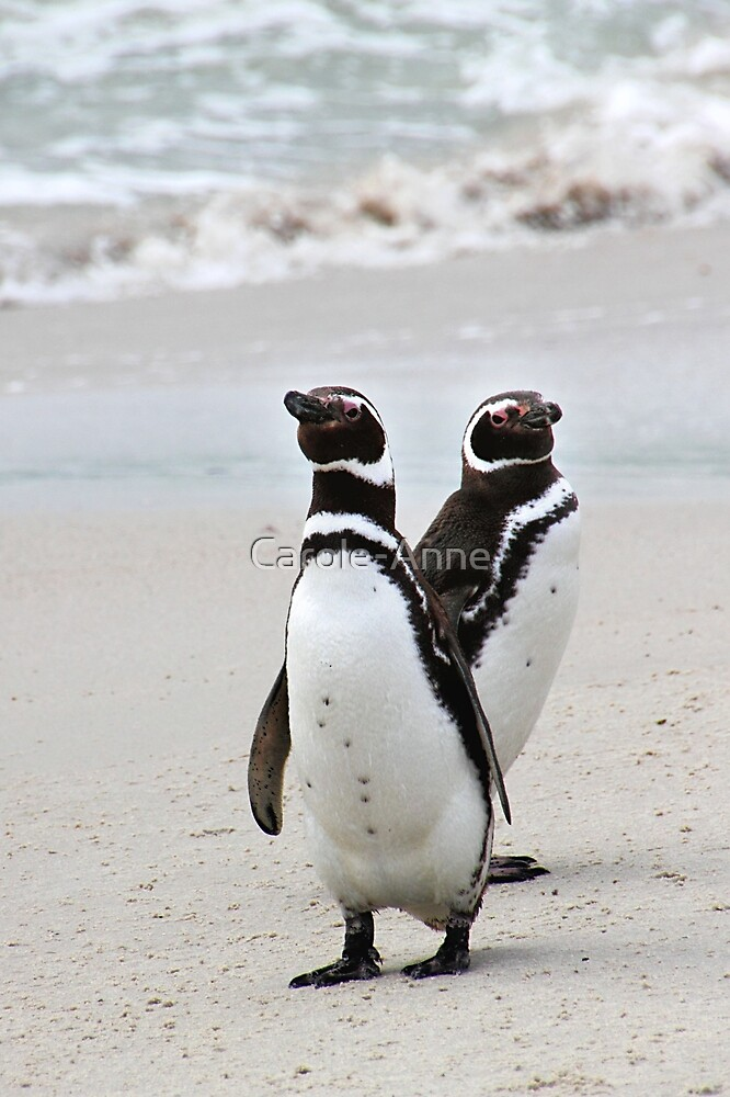 Magellanic Penguins Strolling on the Beach  by Carole-Anne