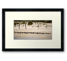 Shorebird Landscape Framed Print