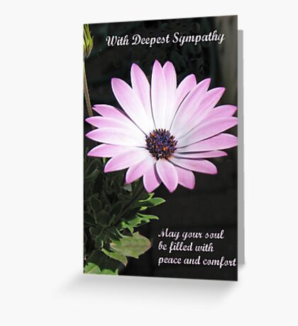 Bereavement Card featuring Cape Daisy Greeting Card