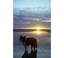 Indy Sunset Photographic Print