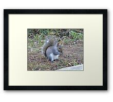 Squirrel in Cape Town Framed Print