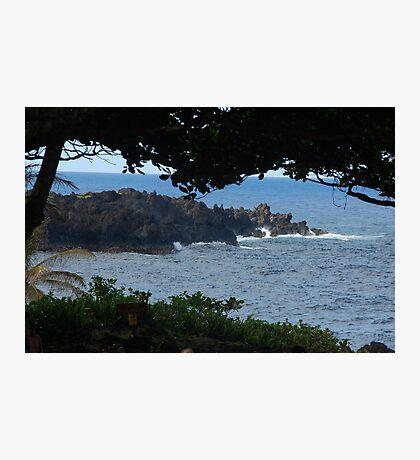 Ocean view through trees Photographic Print