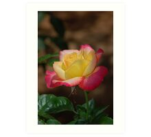 Yellow and Pink Flowers Art Print