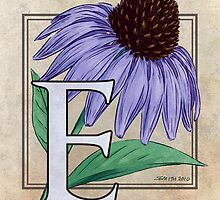 E is for Echinacea by Stephanie Smith