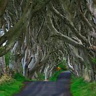 Dark Hedges by Deb Snelson