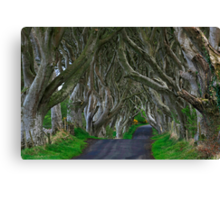 Dark Hedges Canvas Print
